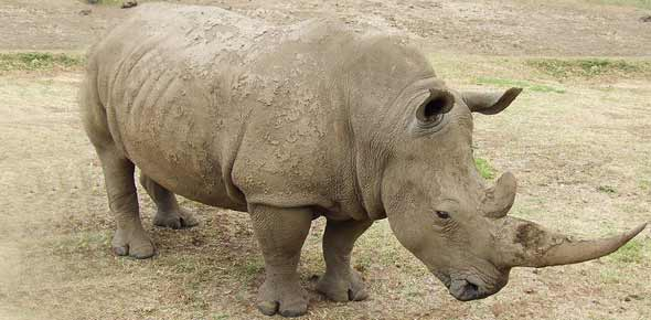 endangered species Quizzes & Trivia