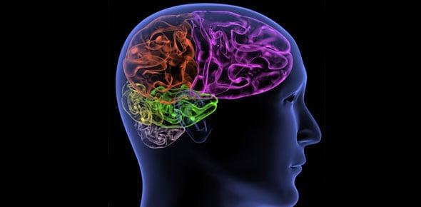 neuroanatomy Quizzes & Trivia