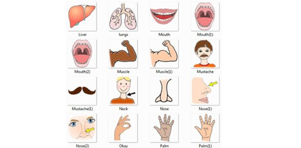 japanese 1 body parts - proprofs quiz, Human Body