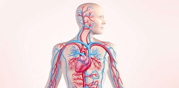 circulatory system Quizzes & Trivia