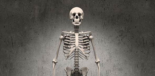 Functions Of The Skeletal System Quiz Questions - ProProfs Quiz