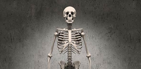 skeletal system Quizzes & Trivia