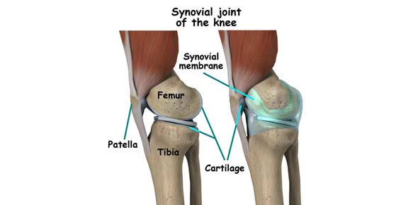 movements at synovial joints - proprofs quiz, Sphenoid