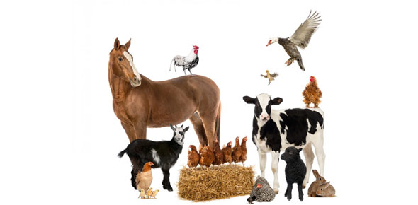 farm animal Quizzes & Trivia