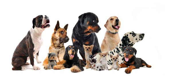 breed Quizzes & Trivia