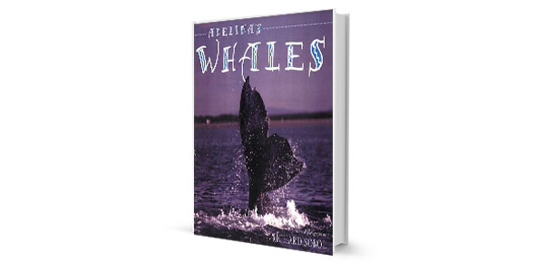 adelinas whales Quizzes & Trivia