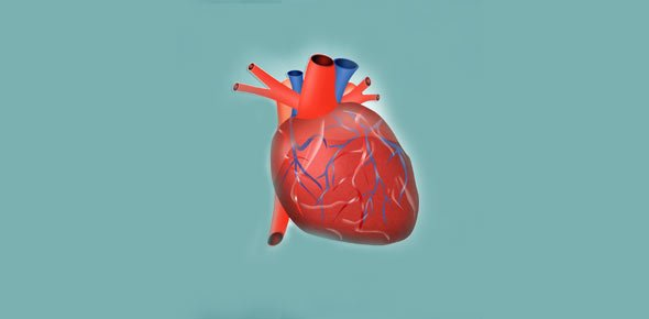 heart anatomy Quizzes & Trivia