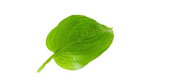 leaf Quizzes & Trivia