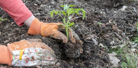 planting Quizzes & Trivia