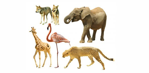 Wild Animals Quizzes, Wild Animals Trivia, Wild Animals Questions