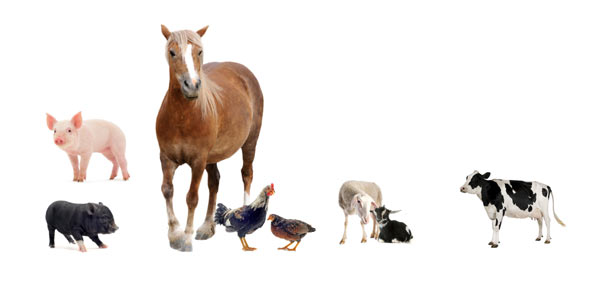 Farm Animals Quizzes, Farm Animals Trivia, Farm Animals Questions