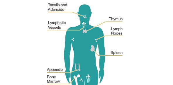 The Lymphatic And Immune System Quiz - ProProfs Quiz
