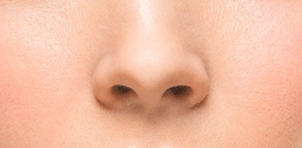 Nose Quizzes, Nose Trivia, Nose Questions