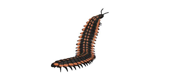 invertebrate Quizzes & Trivia