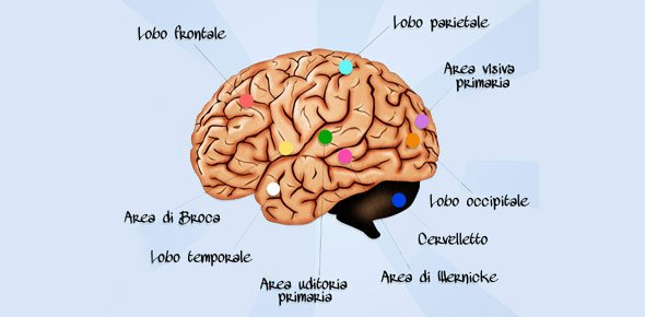 Brain Quizzes, Brain Trivia, Brain Questions