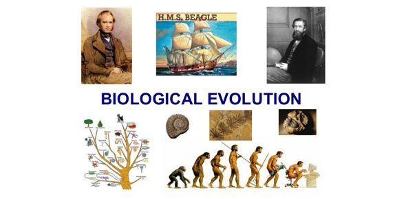 Biological Evolution Quizzes & Trivia