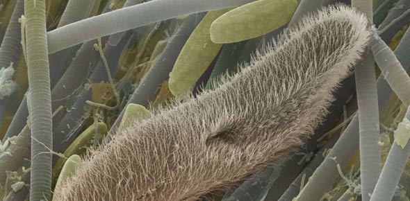 protozoa Quizzes & Trivia
