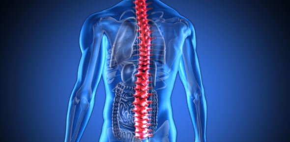 Spine Quizzes Online, Trivia, Questions & Answers - ProProfs