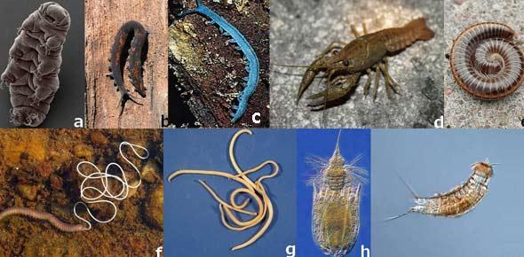 ecdysozoa Quizzes & Trivia
