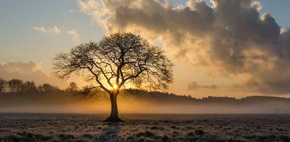 tree Quizzes & Trivia