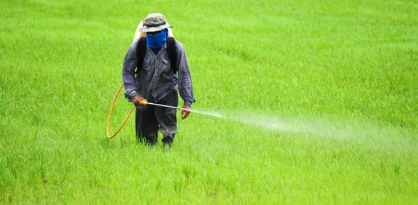 use of fertilizers and pesticides With the advent of the so-called green revolution in the second half of the 20th century—when farmers began to use technological advances to boost yields—synthetic fertilizers, pesticides and herbicides became commonplace around the world not only on farms, but in backyard gardens and on front.