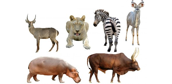 Which Animal Are You Quizzes & Trivia