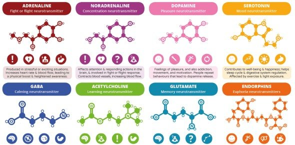Neurotransmitter Quizzes, Neurotransmitter Trivia, Neurotransmitter Questions