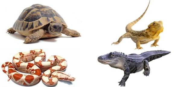reptile Quizzes & Trivia