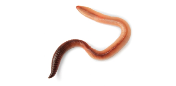 Worm Quizzes, Worm Trivia, Worm Questions