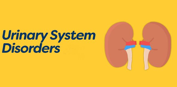 Urinary System Disorders | NCLEX Quiz 116 - ProProfs Quiz