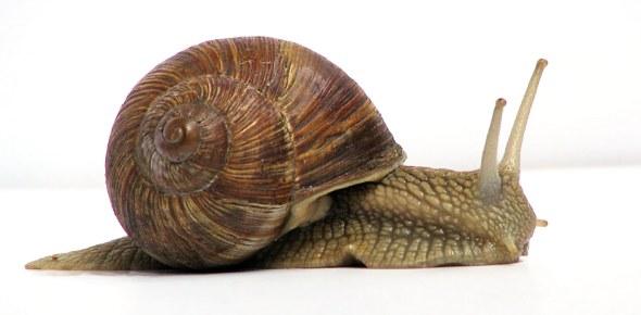 snail Quizzes & Trivia