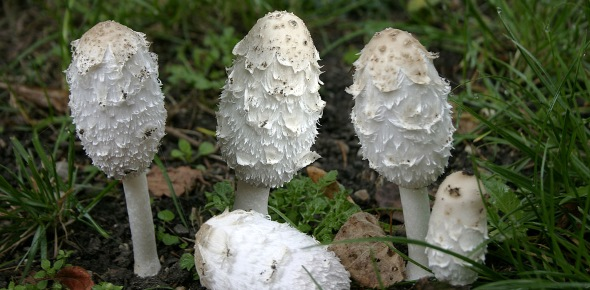 Mycology Quizzes & Trivia