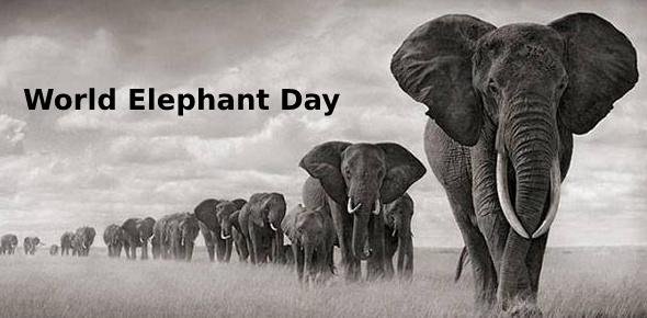 world elephant day Quizzes & Trivia