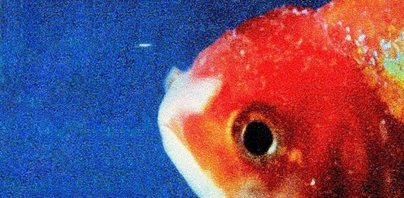 big fish theory Quizzes & Trivia
