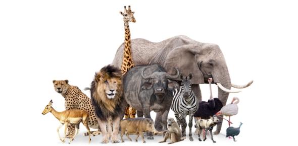 animal Quizzes & Trivia