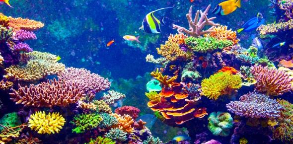 coral Quizzes & Trivia
