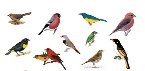What bird are you Quizzes, What bird are you Trivia, What bird are you Questions