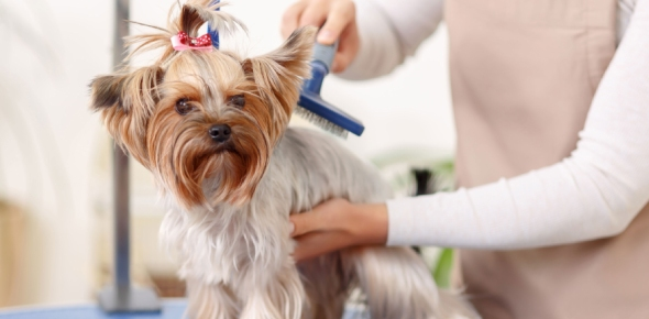 Dog grooming professional Quizzes, Dog grooming professional Trivia, Dog grooming professional Questions