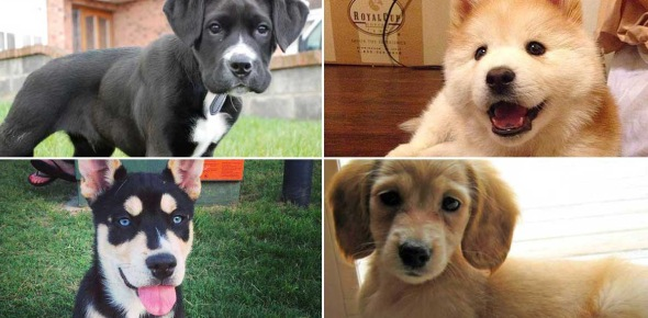 Which dog are you Quizzes, Which dog are you Trivia, Which dog are you Questions