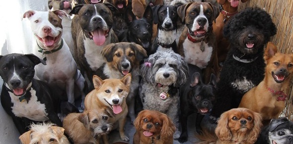 Which dog breed are you Quizzes, Which dog breed are you Trivia, Which dog breed are you Questions