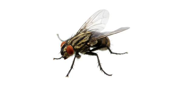 housefly Quizzes & Trivia
