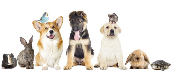 pet animals Quizzes & Trivia