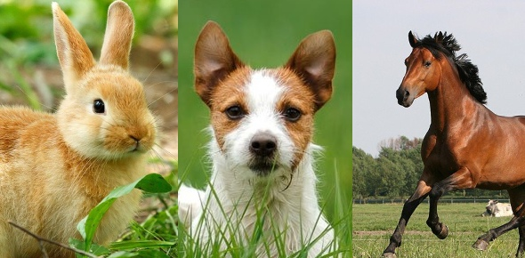 lucky animal Quizzes & Trivia