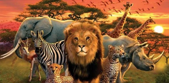 African animal Quizzes, African animal Trivia, African animal Questions