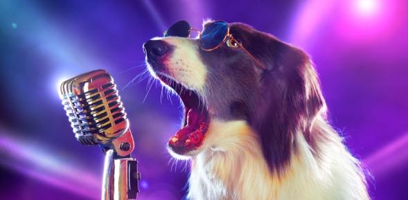 animal sound Quizzes & Trivia