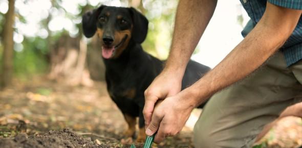 animal expert Quizzes & Trivia