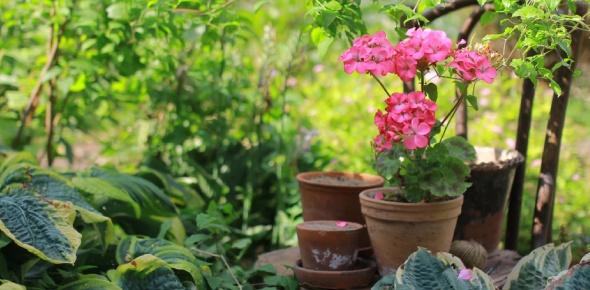 floriculture Quizzes & Trivia