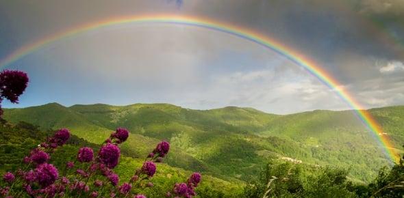 rainbow Quizzes & Trivia