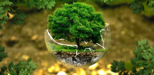 Ecology Quizzes Online, Trivia, Questions & Answers - ProProfs Quizzes
