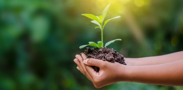 environment Quizzes & Trivia